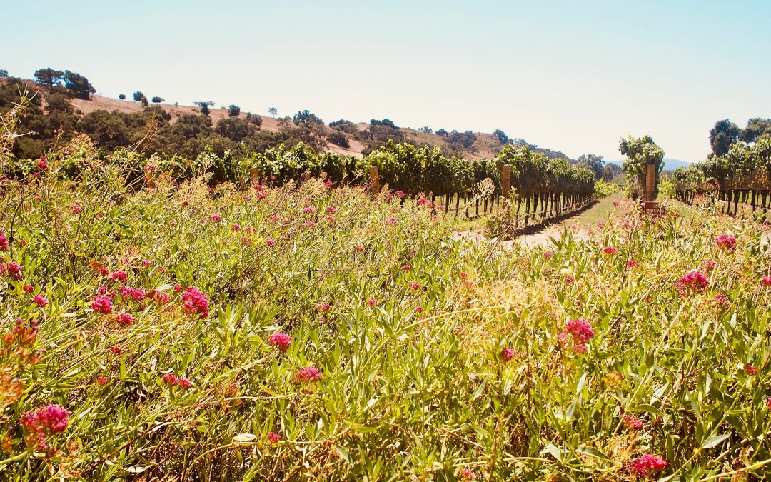 Glamping in California Wine Country